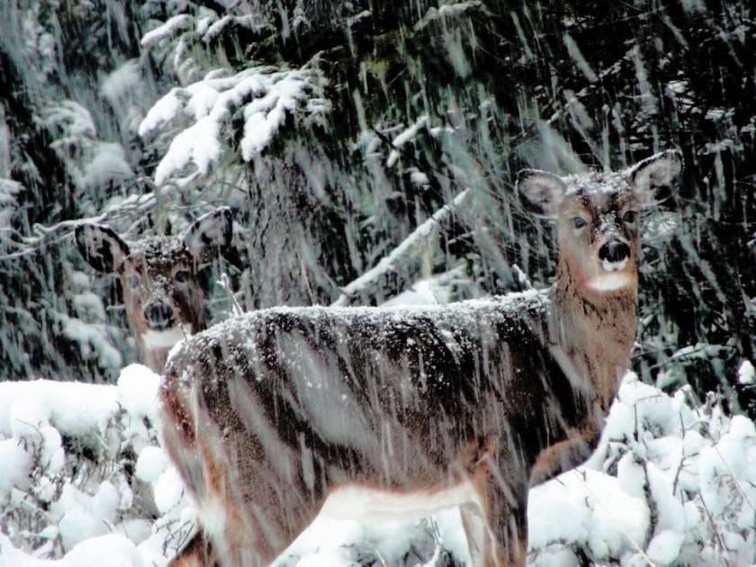 Rendez-Vous Nature- Émission du 30 novembre et 1er décembre 2019