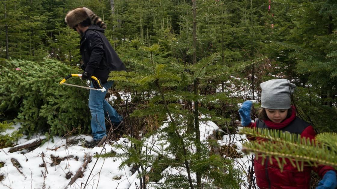Saviez-vous qu'il est interdit de couper un arbre dans une forêt publique?