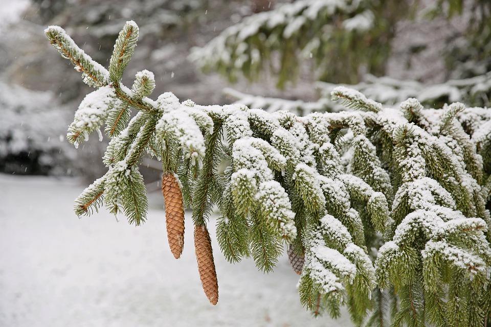 Pas de Noël blanc dans le sud du Québec