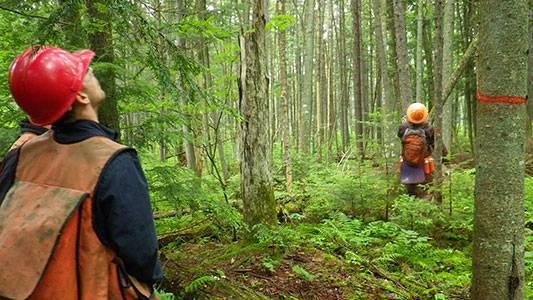 Consultation sur les activités forestières en Abitibi-Témiscamingue
