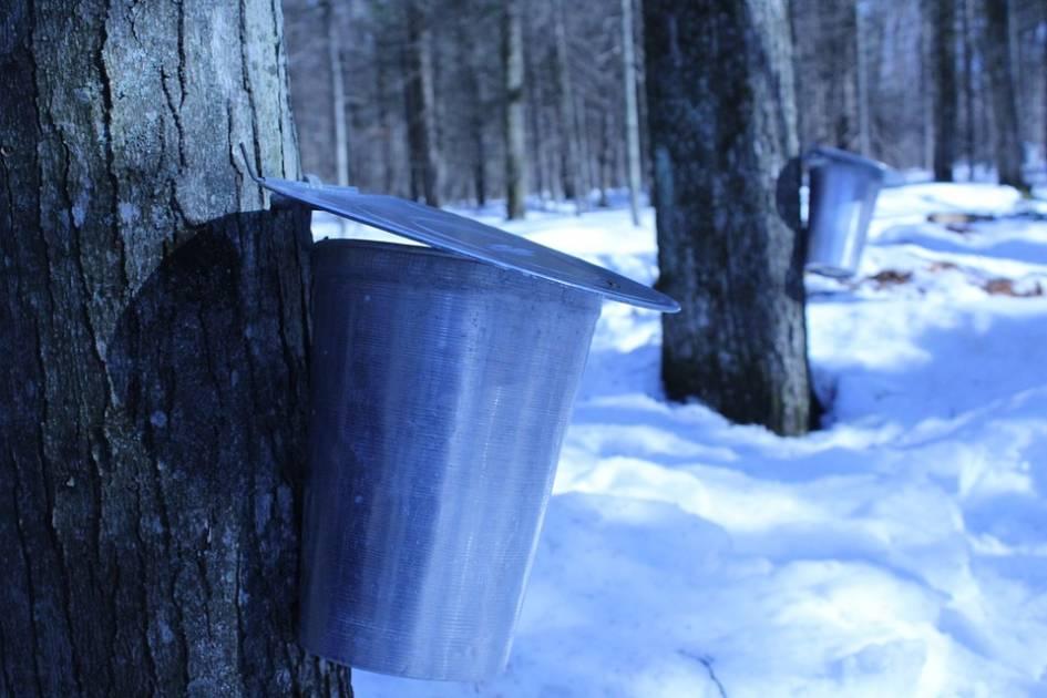 Litige entre l'Ontario et le N. B. sur la production de sirop d'érable
