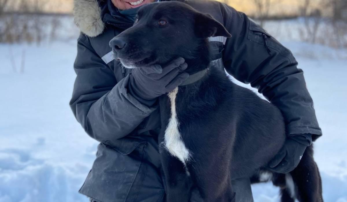 Expérimenter le traîneau à chiens aux Aventures Liguoriennes