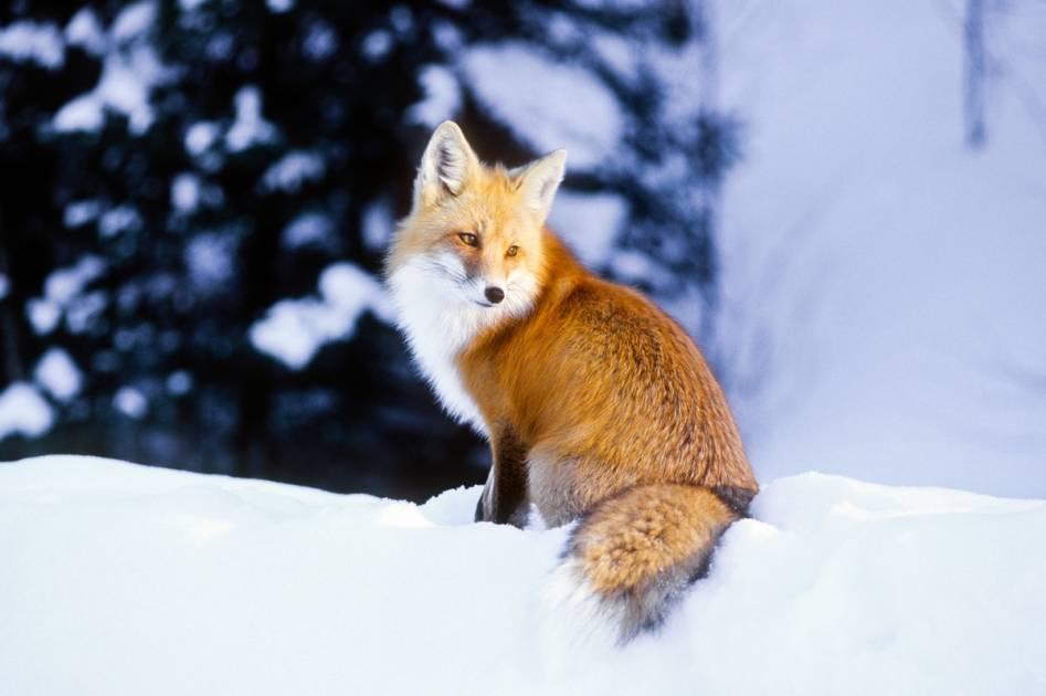 COVID-19: Parcs Canada suspend temporairement ses services