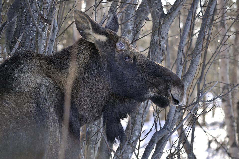 COVID-19: la Fondation de la faune réorganise son fonctionnement