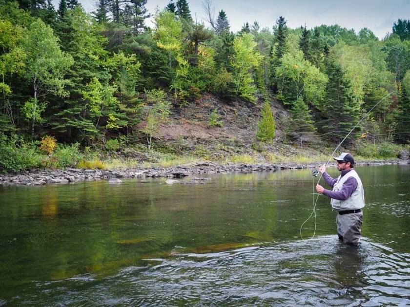 22 000 saumons adultes dénombrés dans les 37 rivières du Québec