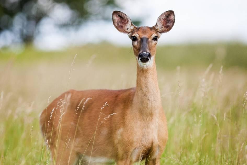 L'importance de contrôler les odeurs en forêt