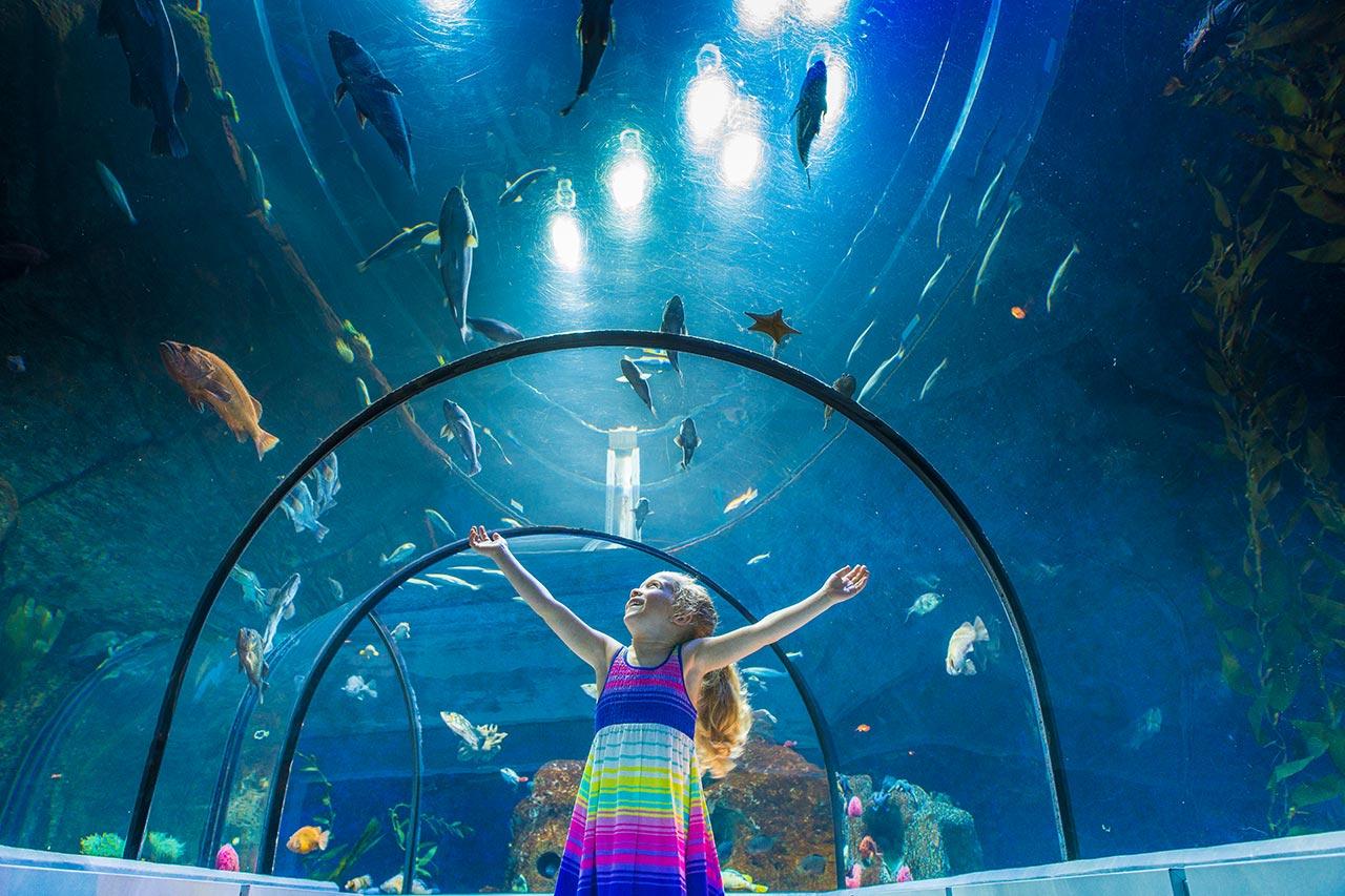 L'Aquarium du Québec rouvrira ses portes le 29 juin