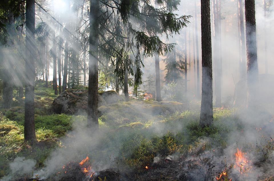 Interdiction de faire des feux dans certaines régions de la province