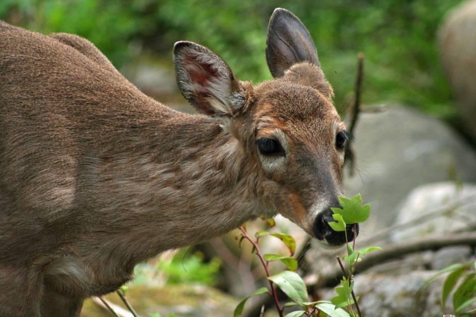 Que faire en présence d'un animal sauvage blessé ou malade?