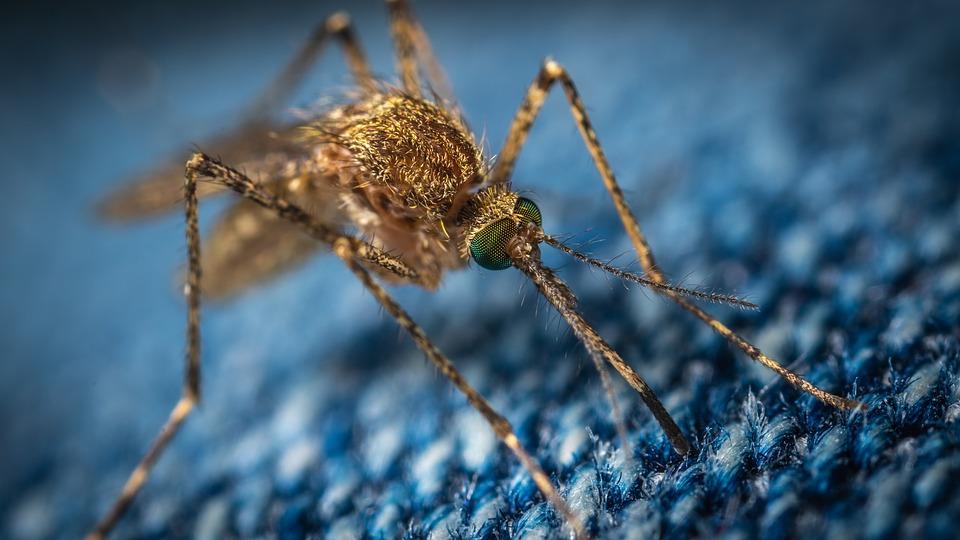 Comment peut-on éviter les piqûres de moustique ?