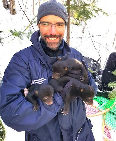 L'ours noir sous étude pendant cinq ans au Québec