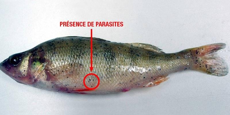 Quels sont ces points noirs sur ce poisson ?
