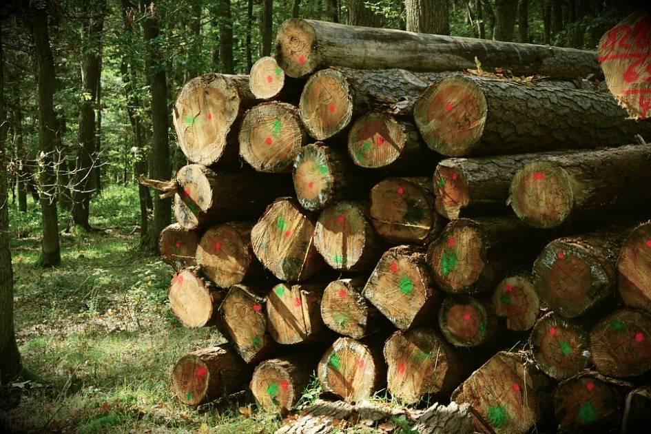 Récolte de bois de chauffage permise en Gaspésie