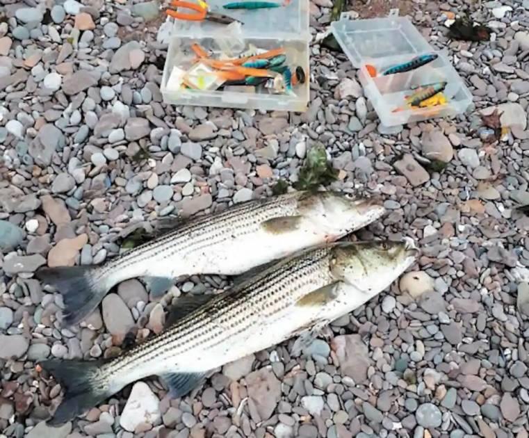 Le saumon, la truite et le bar rayé pêchés dans une même excursion