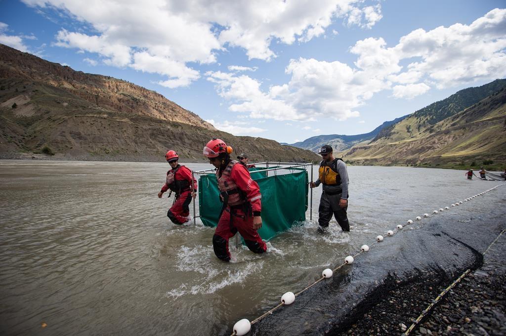 C-B: les dirigeants autochtones demandent d'interdire la pêche au saumon rouge