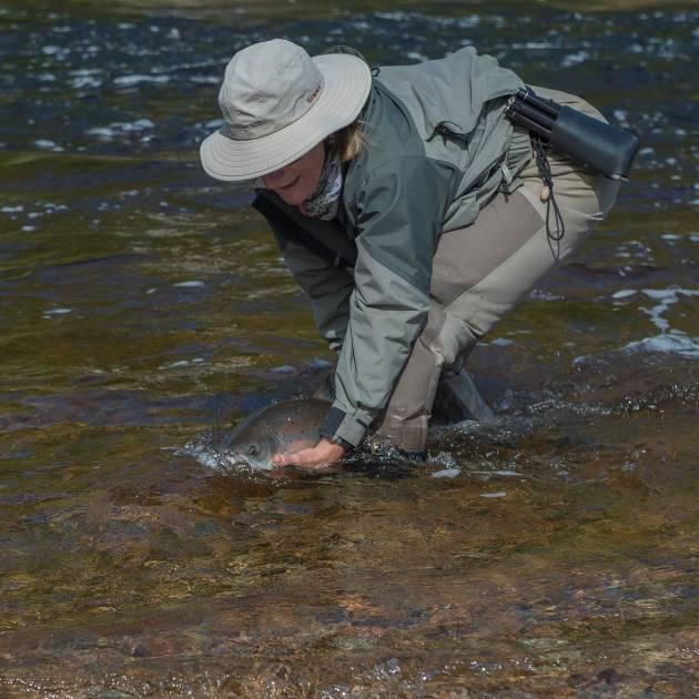 Le Plan de développement de la pêche au saumon se poursuit au Québec