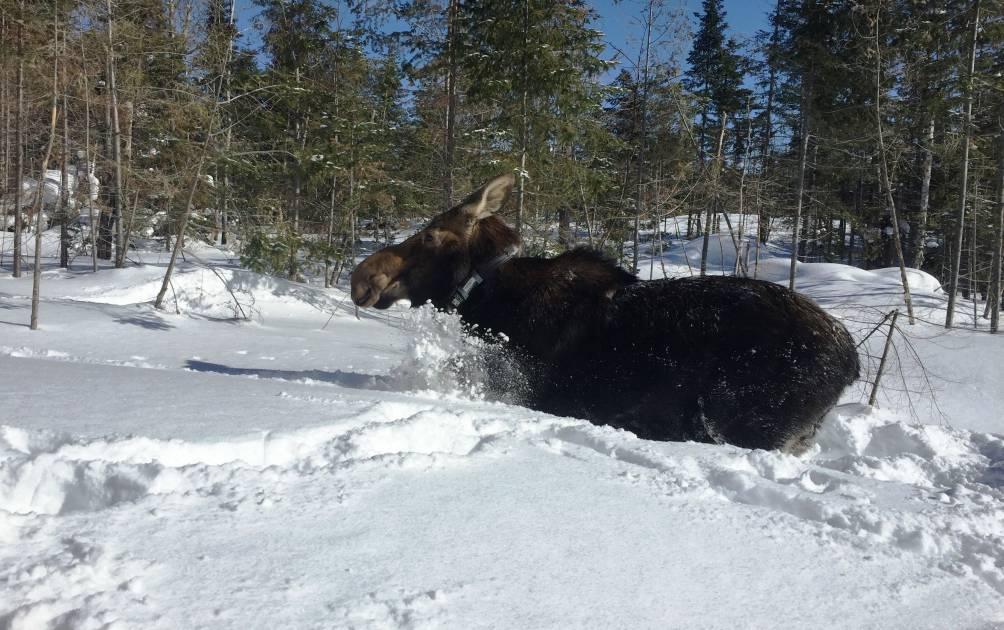 Étude sur la tique d'hiver en cours: soyez vigilants !