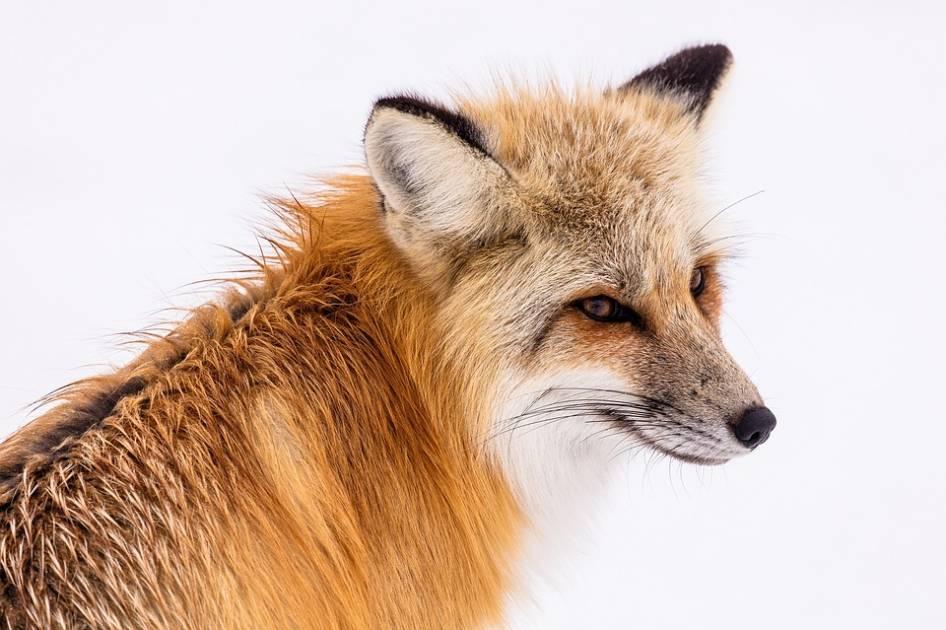 Les populations d'animaux en péril ont diminué de 42 % depuis 50 ans au Canada
