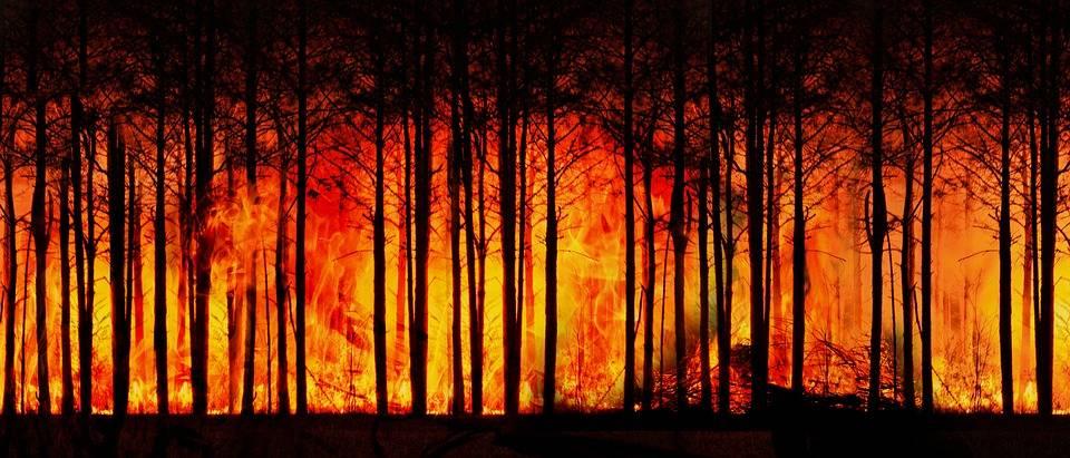 La fumée des incendies de forêt de l'Ouest américain se rend jusqu'en Alberta