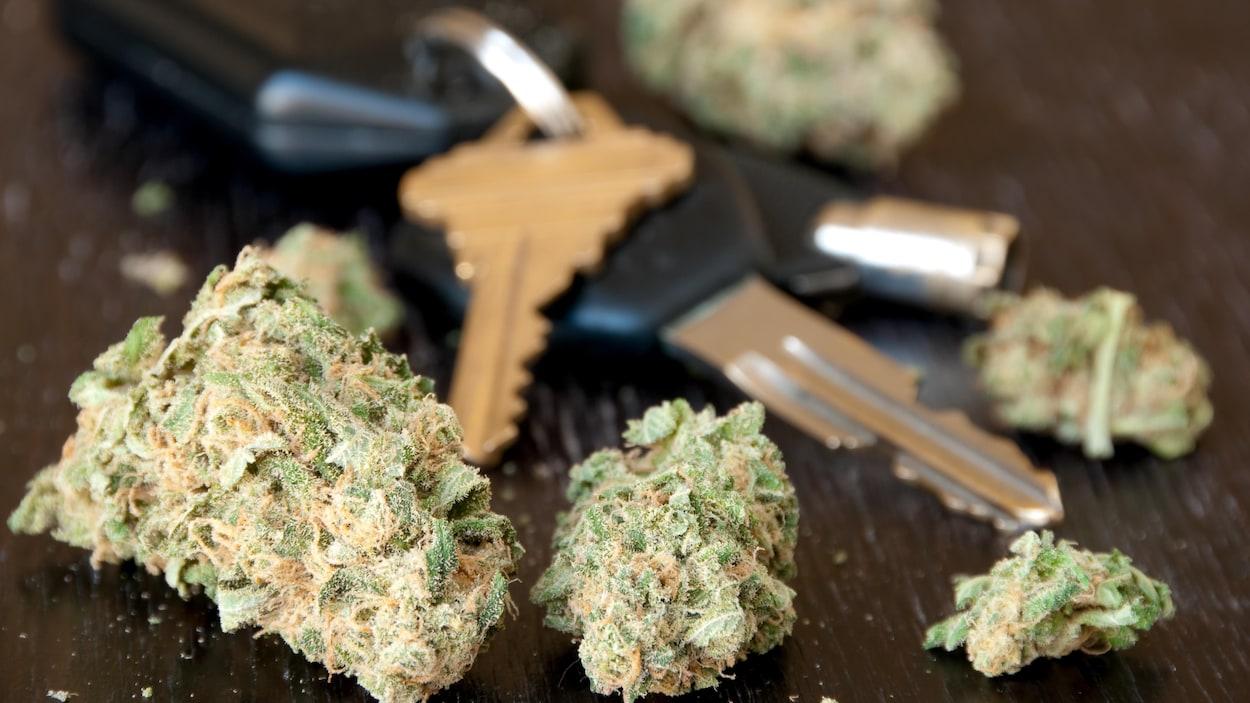 Les CAA au pays lancent une campagne contre le cannabis au volant