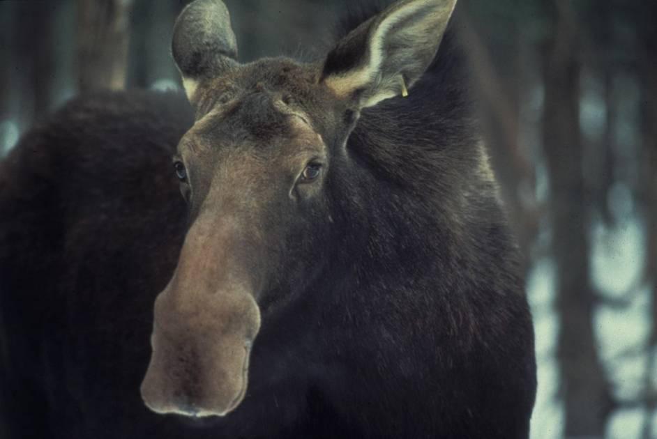 Pandémie de COVID-19: rappel des modalités concernant les activités de chasse