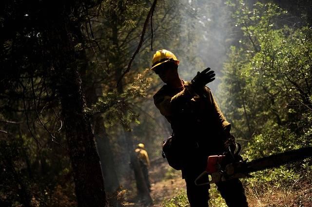 Un nouvel organisme pour favoriser la certification des forêts privées