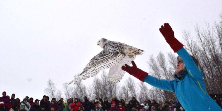 Conférence virtuelle sur l'emblème aviaire québécois