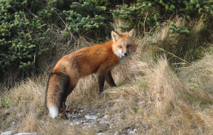 Outiller le Haut-Richelieu pour la protection de la biodiversité