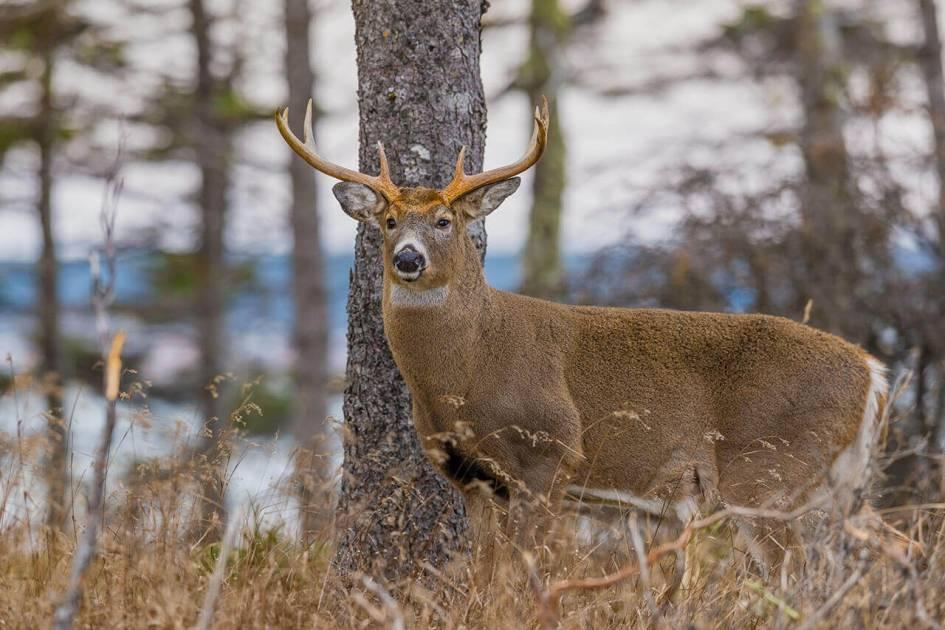 Encore plus de possibilités pour une chasse en sécurité