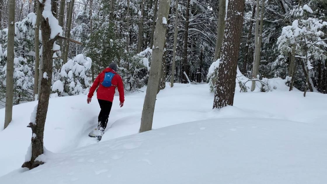 Parc du Domaine Vert: des beautés de la nature hivernale à découvrir