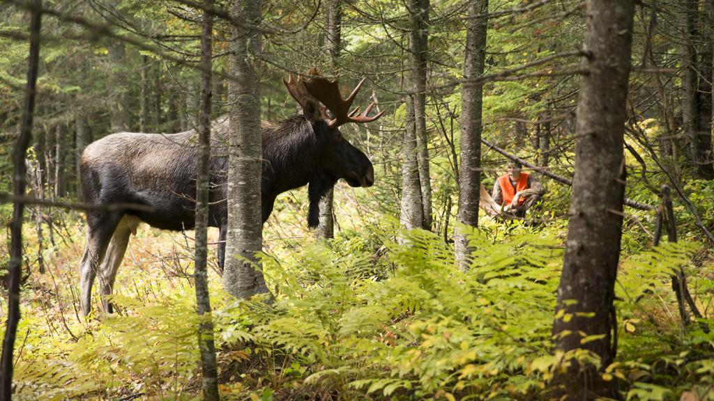 La SÉPAQ lance la chasse 2021 dans ses réserves et Anticosti