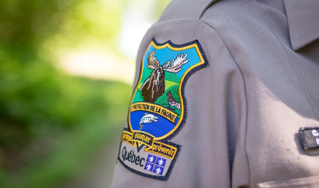 Trois actes de braconnage relatés en Outaouais