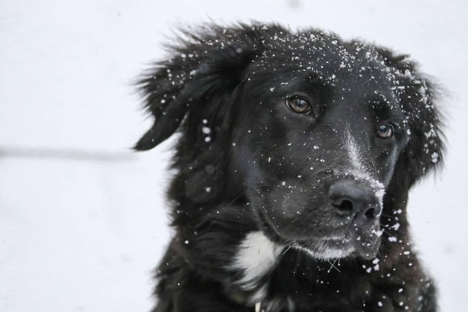 Les propriétaires de chiens heureux de pouvoir se promener pendant le couvre-feu