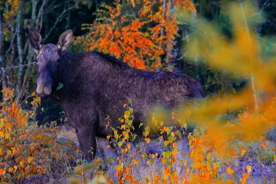 L'importance de savoir choisir un nouveau secteur de chasse