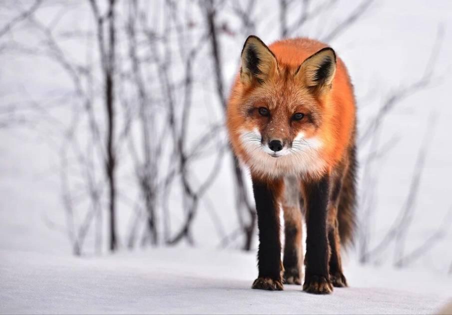 Plan d'action 2020-2023 : un nouveau fonds pour protéger la faune nordique