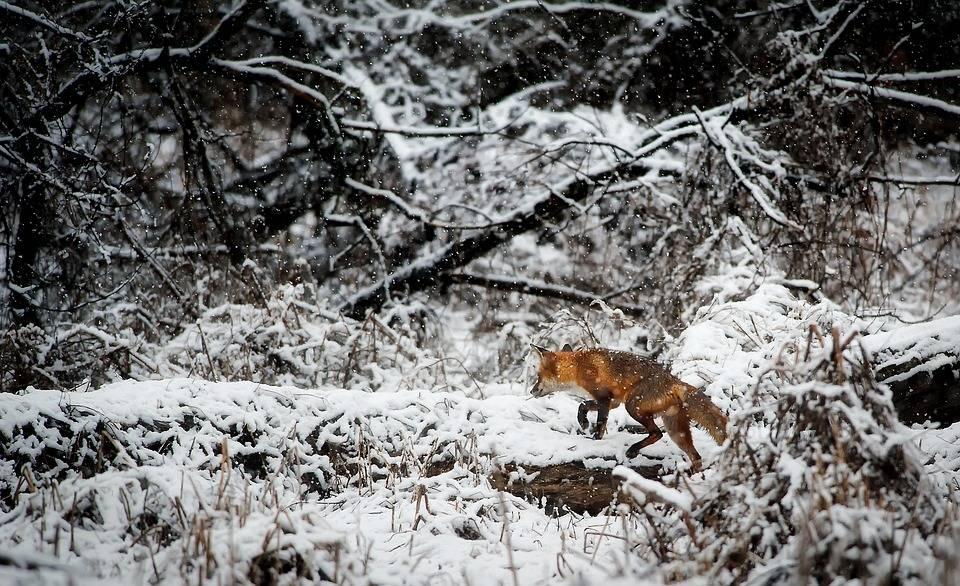 Rendez-Vous Nature cherche des collaborateurs au Québec