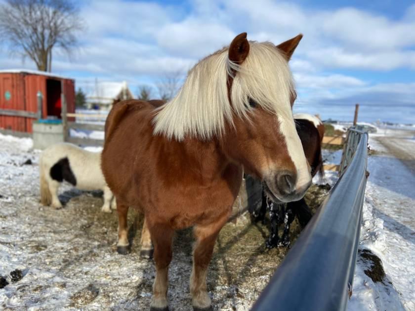Expérimenter la randonnée à cheval aux Écuries Gaétany