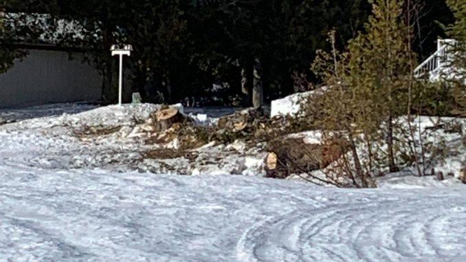 Des riverains du Lac du Portage ne se gênent pas pour couper des arbres