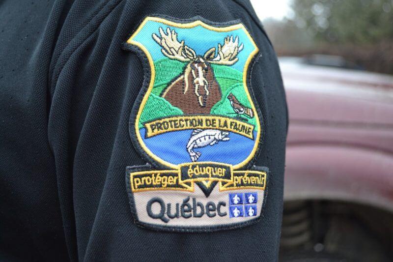 La faune porte un dur coup au braconnage en Gaspésie