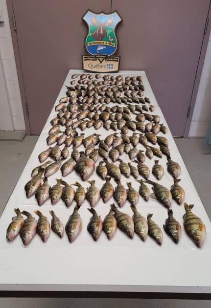 Pêche illégale: saisie importante réalisée à Saint-André-d'Argenteuil