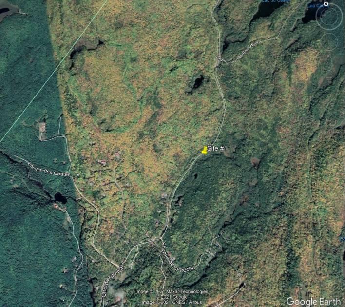 Deux cerfs de Virginie victimes de braconnage à Mandeville