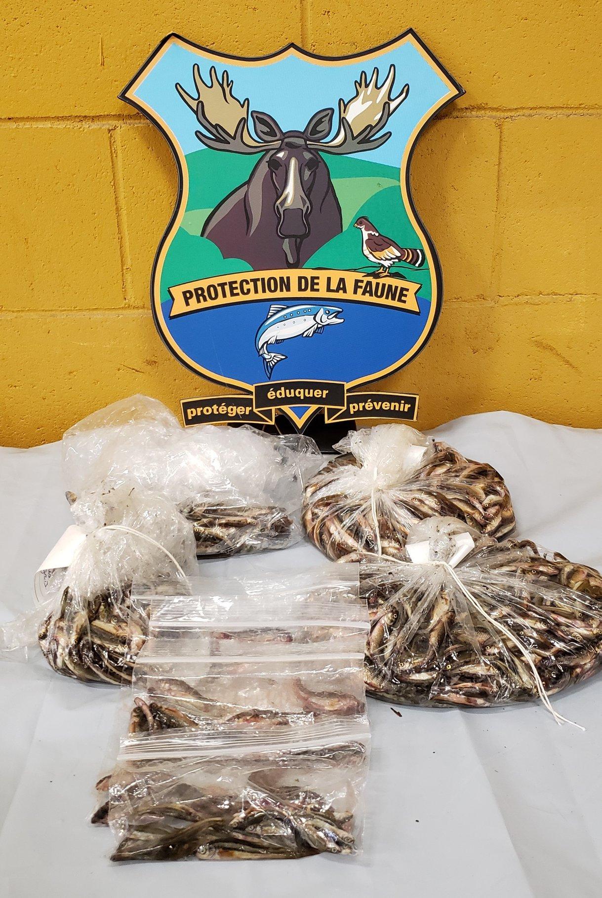 Une dizaine d'individus interceptés par des agents de la faune en Outaouais