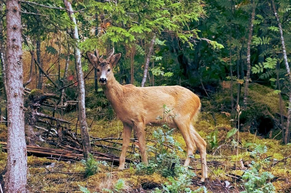 Création de Réserves Nationales de la faune : chasseurs et pêcheurs inquiets