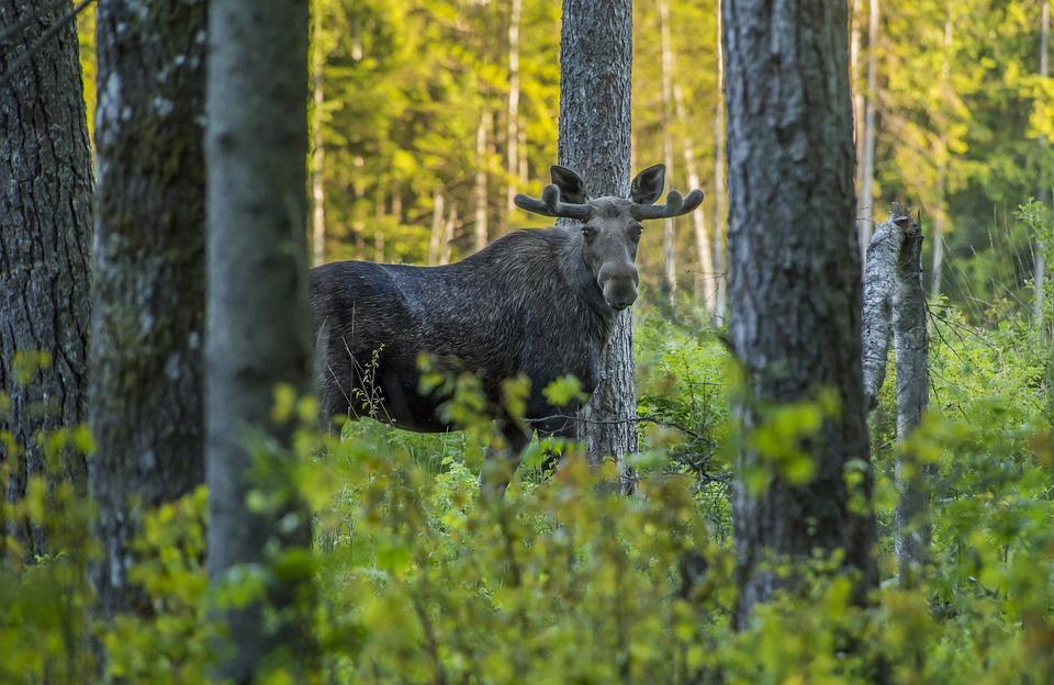 Nouvelle loi sur la conservation de la faune: à l'avantage des adeptes