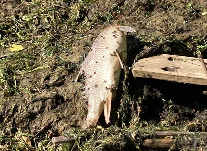 Le « festival » du poisson mort ?