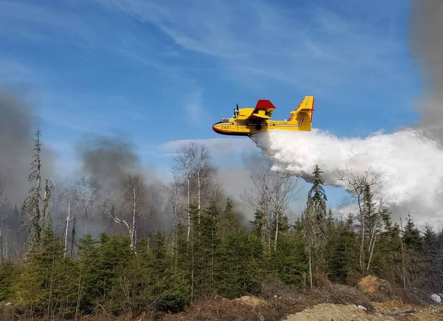 Levée de l'interdiction de faire des feux à ciel ouvert en forêt ou à proximité