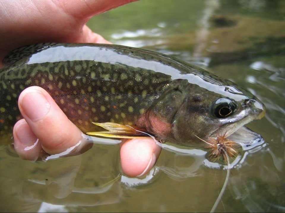 Bien manipuler le poisson pour assurer sa survie