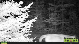 Est-ce que nous avons déjà côtoyé un cougar sauvage?