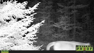 Est-ce que nous avons côtoyé un cougar sauvage?