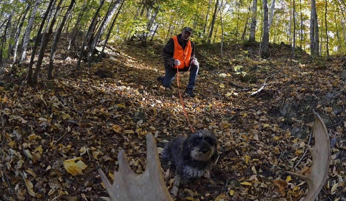 Un partenariat signé entre Zecs Québec et les conducteurs de chiens de sang
